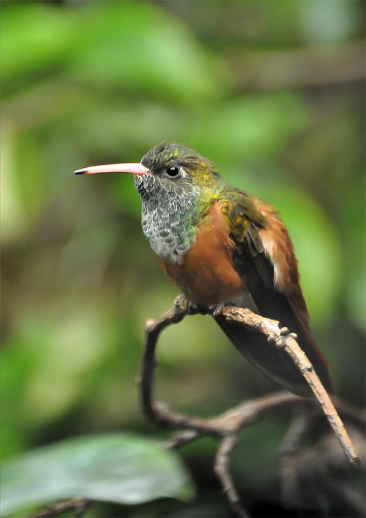 Les cycles biologiques chez les oiseaux