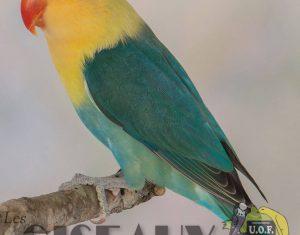 Arrêté espèces envahissantes à la Réunion, l'UOF donne le ton.