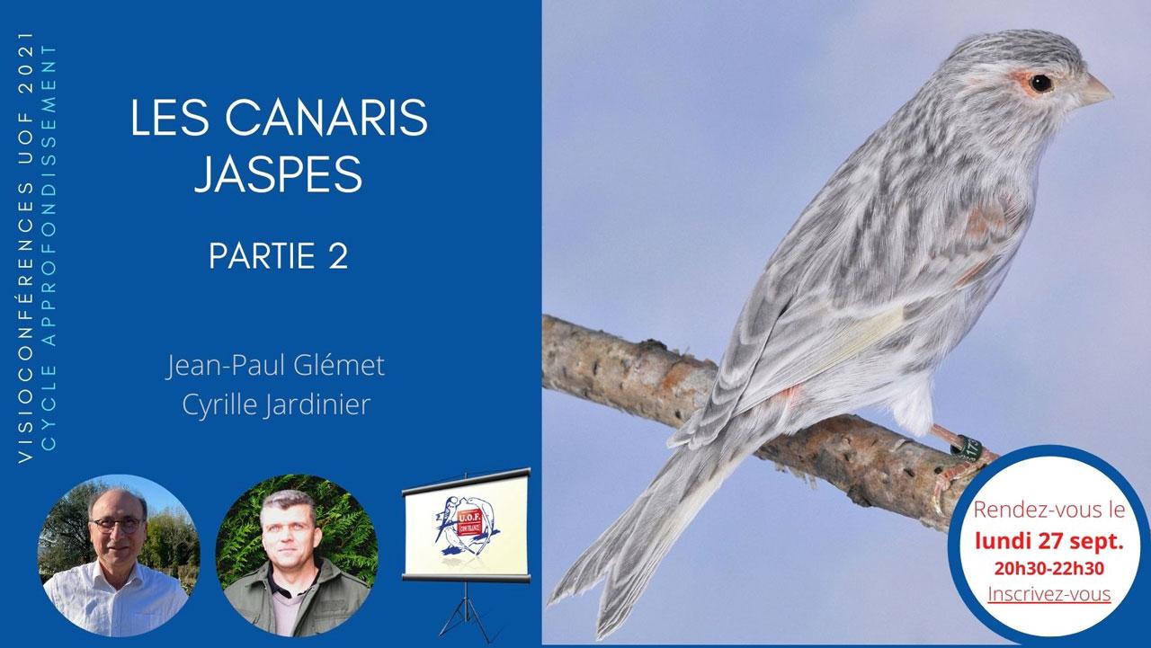 Les Canaris jaspes partie 2