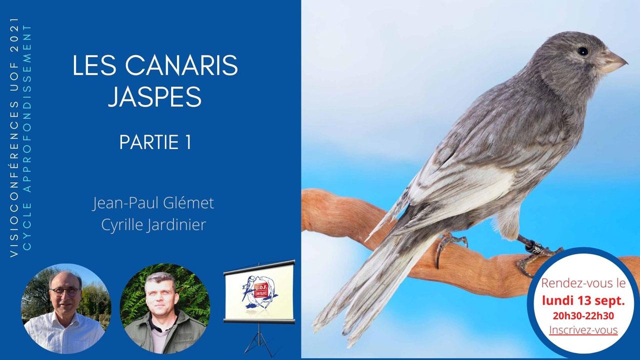 Les Canaris jaspes partie 1