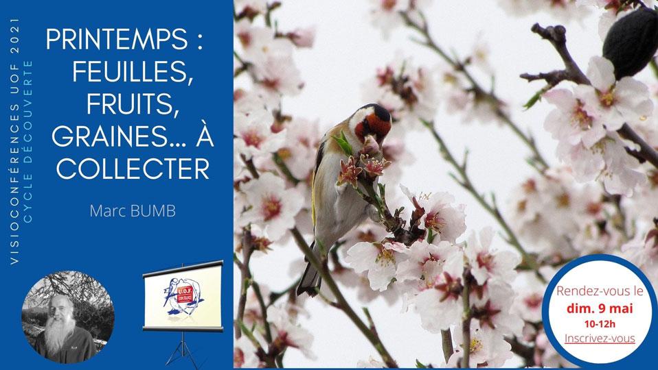 Les plantes du printemps pour nos oiseaux