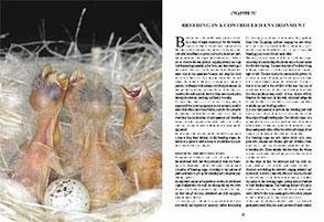 CHARDONNERET TÉLÉCHARGER PDF DE LE GRATUIT LIVRE GRATUITEMENT NATALE MASSIMO